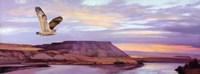 Skyline View Fine Art Print