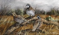 Bobwhite Trio 2 Fine Art Print