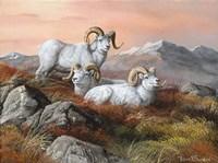 Denali Trio Fine Art Print