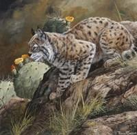 Wild Cat Fine Art Print