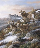 High Country Kings Fine Art Print