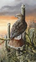Saguaro Hunter Fine Art Print