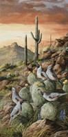 Sunset In Sonora Fine Art Print