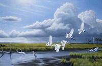 Summer Storm Egrets Fine Art Print