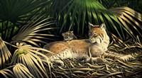 Sunny Spot Bobcat with Kittens Fine Art Print