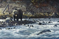 Along The Yellowstone - Grizzly Fine Art Print