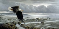 Lowtide - Bald Eagle Fine Art Print