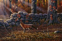 Autumn Reds - Red Fox Fine Art Print