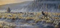 Autumn Classic - Elk Fine Art Print