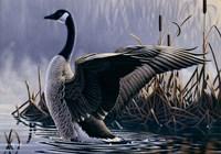 1992 Canada Goose Fine Art Print
