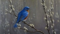 Signals Of Spring - Eastern Bluebird Fine Art Print