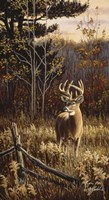 Autumn Whitetail Fine Art Print