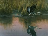 Evening Flight - Great Blue Heron Fine Art Print
