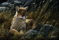 Cougar In The Grass Fine Art Print