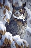 Winter Watch - Great Horned Owl Fine Art Print