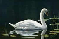 Stillwater Fine Art Print