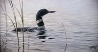 Emerging Loon Fine Art Print