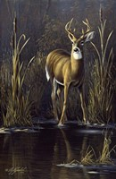 Whitetail Buck Fine Art Print