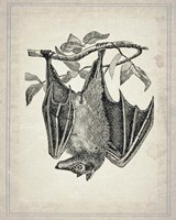 Bats 4 Framed Print