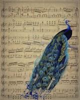 Peacock 1 Fine Art Print