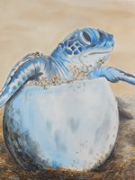 Sea Turtle Hatching Fine Art Print