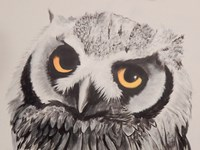 Give a Flying Hoot Fine Art Print