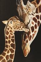 Giraffes First Kiss Fine Art Print