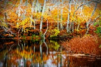 Fall Pond Colors 1 Framed Print