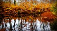 Fall Pond Colors 2 Fine Art Print