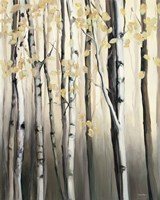Golden Birch II Fine Art Print