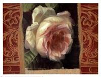 Classic White Rose Fine Art Print