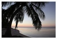 Palm Tree Sunset Fine Art Print