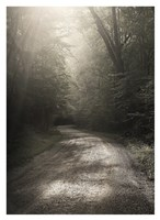 Back Country Road Fine Art Print