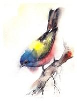 Bunting Bird Fine Art Print