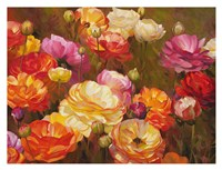 Ranunculus Garden Fine Art Print