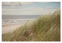 Beach Grass I Fine Art Print