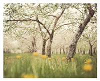 Quiet Orchard Fine Art Print