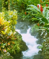 Waterfall, Tabacon, Costa Rica Fine Art Print