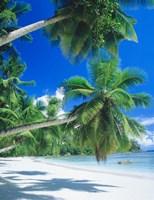 Mahe Seychelles Fine Art Print