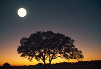 Full Moon Over Silhouetted Tree Fine Art Print