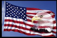 Bald Eagle on Flag Fine Art Print