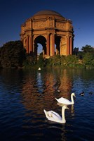 Swans and Palace of Fine Arts Fine Art Print