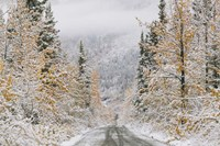 Empty Forest Road, McCarthy, Alaska Fine Art Print