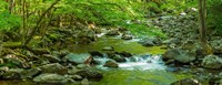 Creek in Great Smoky Mountains National Park, Tennessee Fine Art Print