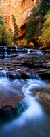 North Creek, Zion National Park, Utah Fine Art Print