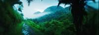 Rainforest in Cayo District, Belize Fine Art Print