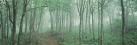 Forest Niigata Martsunoyama-cho, Japan Fine Art Print