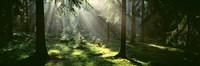Forest, Uppland, Sweden Fine Art Print