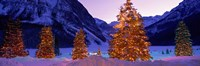 Christmas Trees, Lake Louise, Alberta, Canada Fine Art Print