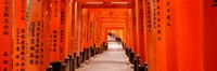 Tunnel of Torii Gates, Fushimi Inari Shrine, Japan Fine Art Print
